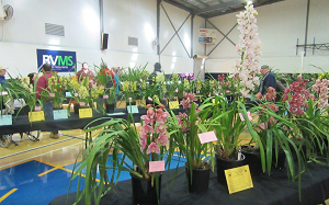 Barmera Recreation Centre - Orchids